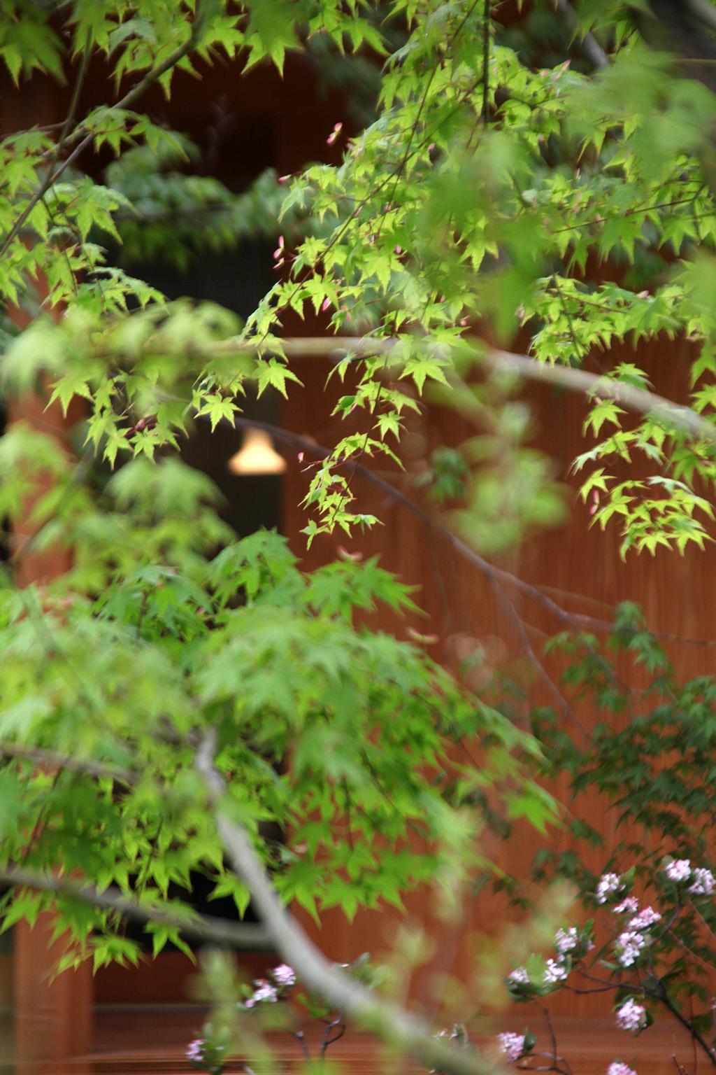 たつの市の木の家 新緑が美しい庭の紅葉