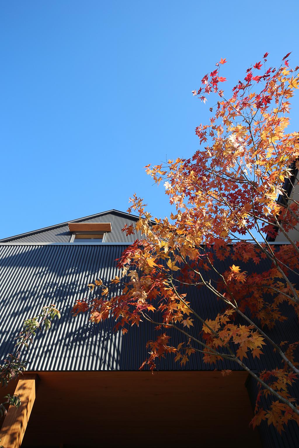 相生市の木の家 紅葉が黒い外壁に映える