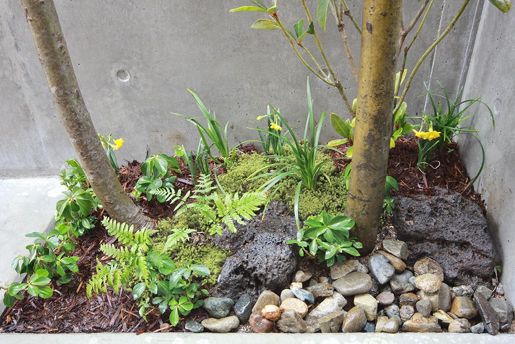 姫路市の木の家 玄関ポーチの植栽