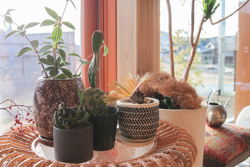 書写の家 可愛い観葉植物