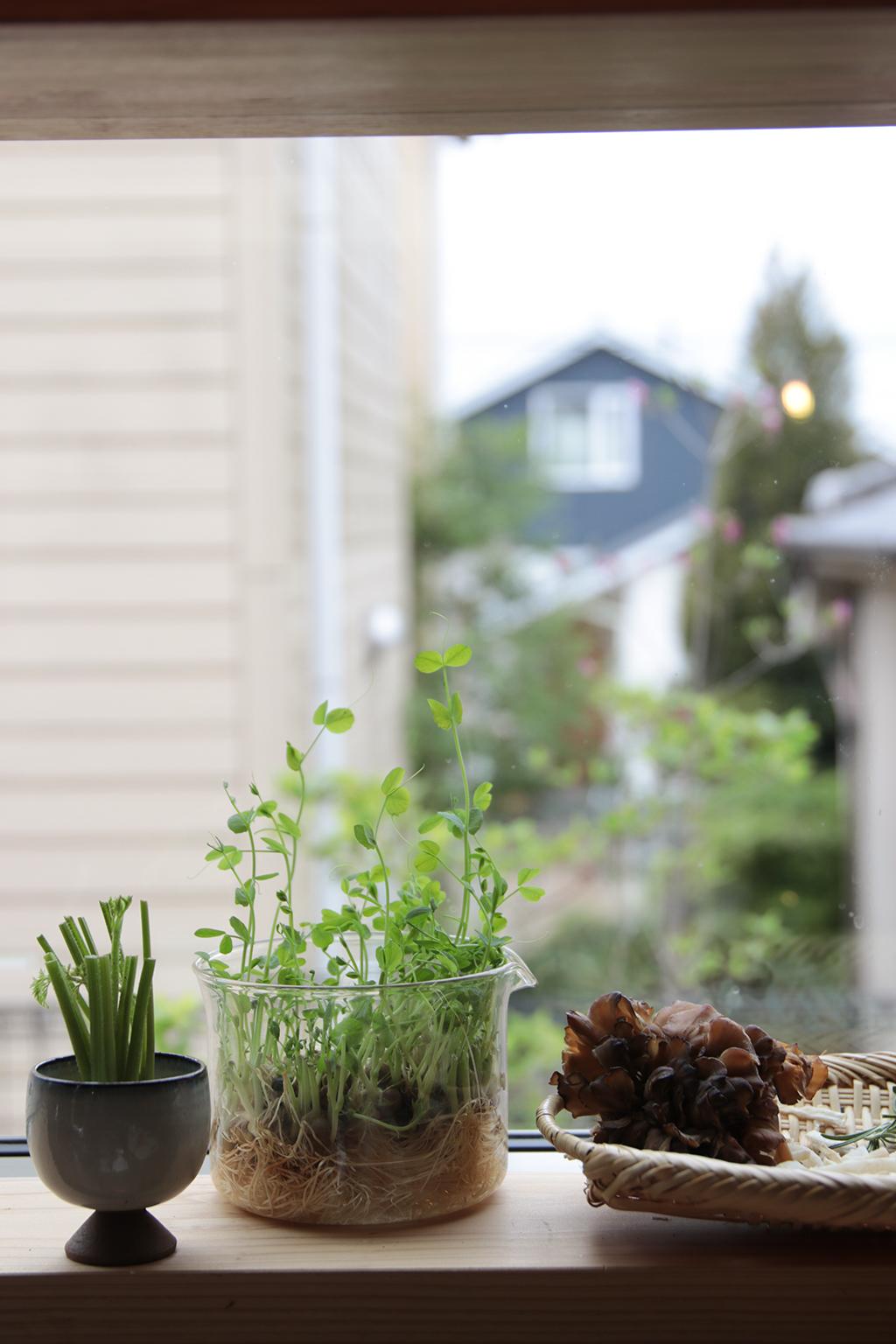 加古川市の木の家 キッチンの小窓を飾る植物たち