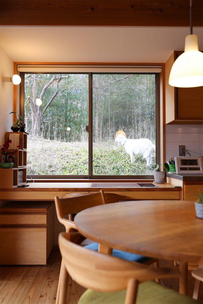 姫路市の木の家 ペットのヤギが見えるデスクスペース